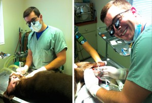 Dog-Cavity-Gold-Crown---Dr-Ryan-Oneill-DMD---Tennessee-Family-Dental